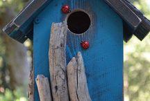 Bird watching! / by Sharon Hornby