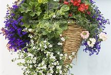 Hanging baskets / by Brandi Young