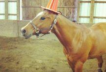 Horse crazy / by Kimberly Levi-Stordeur