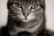 Some Cute Lil' Nuggets / I admit it, I'm a cat lady / by Allie Gleditsch