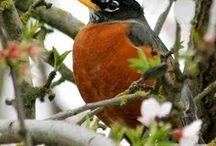 Bird book / by Donna Raitanen