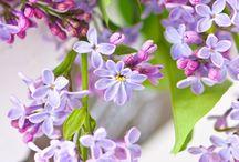 FLOWERS / Beautiful flora / by Ann Zangs