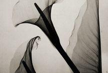 ArtLikes / by Fatima Khalid