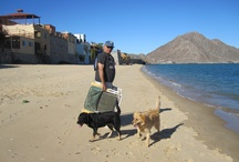 In Baja California / Baja California, Mexico, my winter home, offers great friends, great food, great beaches!  Time to kick back and relax! / by Judy Wright of JudithGayleDesigns