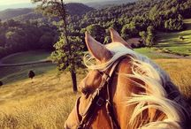 My 1st love: horses <3 / by Kaili