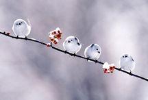 birds / by Erin Pangrazio