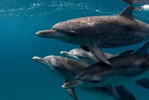 Dolphins / by C Moortinez