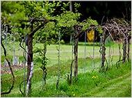 Garden FRUITS / by Debra Meacham