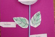 Plants / by Colette Klein