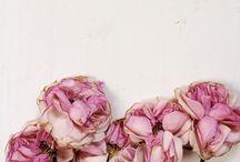 flowers / by Samantha De Reviziis Lady Fur