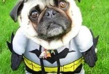 Animal Memes / Hilarious Animal Memes that make you Laugh Out Loud! / by PetMountain.com