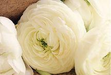 Flowers/Plants/Garden / by Sunshine & Dimples Boutique