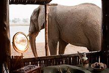 Safari / by Lonno Lodge