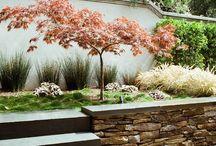 Zen Garden / by Rachel