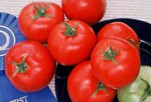 Tomatoes, just tomatoes / by Diann Pavelka