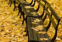 autumn / by Cheri
