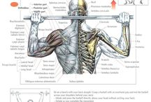 Shoulder Exercises / by CTD Sports