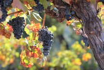 Blogs / Learn about the unique characteristics that go into making your favorite bottle of Paso Robles wine, and explore wines that may be a bit unfamiliar through the 2013 Varietal of the Month Grower Blogs!   / by PasoRoblesWine Country