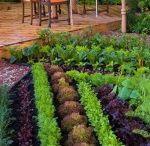 Gardening / by Hilary Bernstein {Accidentally Green}