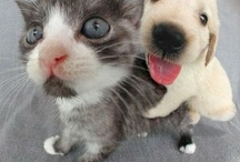 Cute ☺ Pets / by Nounours
