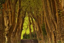 Bridges, Paths, Trails & Roads / by mel layman