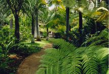 Tropical Gardens / by Lucy Moloney