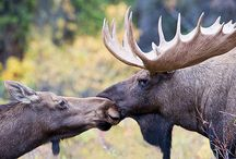 Moose Complete Me <3 / by Kimberly Hieber