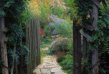 Garden / by Robin Stokes