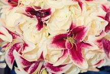 Linda's Wedding / by Linda Sutton
