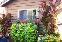 Back yard Haven / by Linda Valenzano