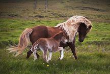 Horses / by Marvella Franco