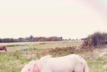 pink <3 / by janaine william