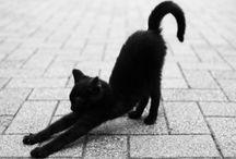 Magical Cats  / by HaleyKaren
