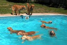 I Need A Pool / by Liz Broglin