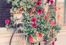 Bicycles / by Karen A King