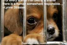 animal rescue / by Karen Lovvorn
