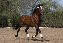 Horses / by ✦Jenna Anderson ✦