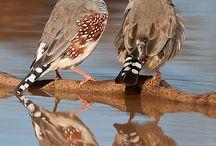Birds / by Heather Hicks