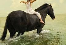 Horses / by EM