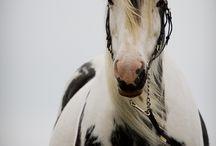 Horses / by Sabrina Hobbs McNair