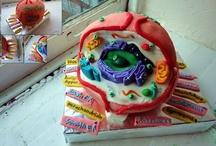 Cell Cake / Vanessa Liesik tarafından