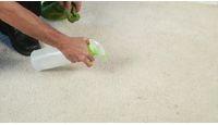 carpet stains / by Courtnee Herron