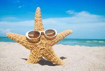 Life's a Beach! ~ !En el mar, la vida es mas sabrosa! / Sea Shells, Sand Dollars, Sea Urchins, Starfish, Sand Castles and all other great treasures you might find at the beach, seashore & amongst the sand dunes. / Conchas de mar, dólares de arena, erizos de mar, estrellas de mar, castillos de arena y todos los otros tesoros estupendos que se pueden encontrar en la playa, costa y entre las dunas de arena. / by Irene Niehorster