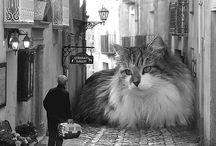 cats / by MegaCalendars.com