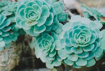 ...oh so succulent... / ...for the love of succulents... / by Michelle Ensminger
