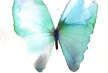 Butterflies/Flutterbies / by Mike Nixon