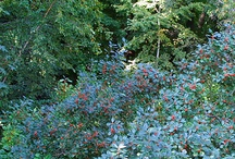 Gardening ideas / by Jane Wise