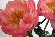 flowers and plants / by Stephanie Cardoza