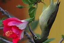 Hummingbirds / by Mindy Lenneman