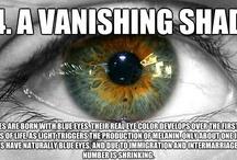 Eye facts / by Vera Wilton Opticians